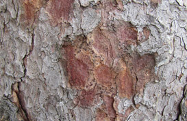 Bark Textures – Part III